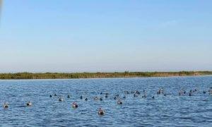 Texas Coast Duck Hunting | Bay Flats Lodge Texas | Texas Duck Hunting