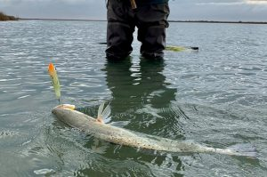 | Texas Duck Hunting | Bay Flats Lodge Texas | Texas Hunting